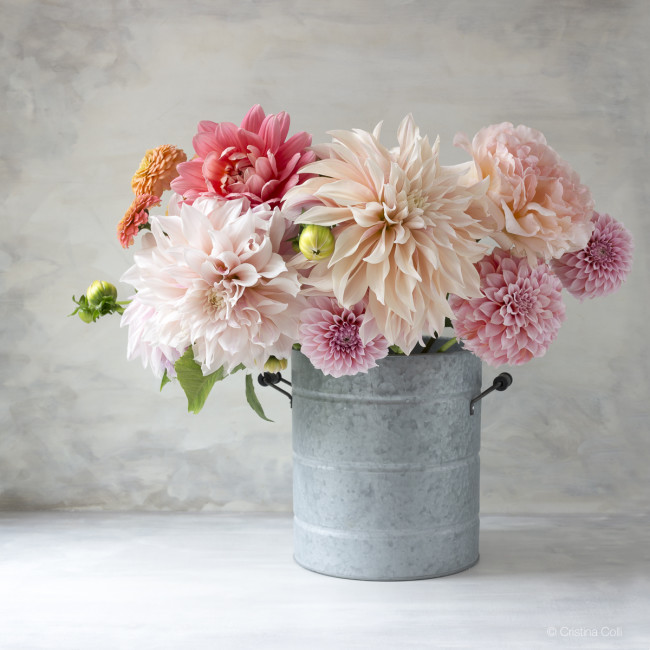 roses and dahlias in a bucket